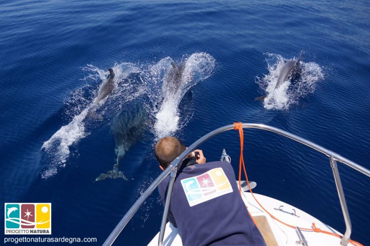 dolphinwatchingalghero